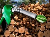 Бизнес на биотопливе - беспроигрышный вариант