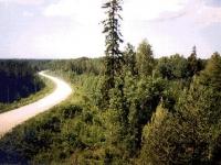 Русский лес не спешит в Финляндию