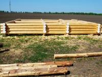Россия ждёт финских инвестиций в обработку древесины на Дальнем Востоке