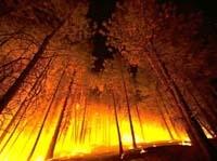 В Приморье бушует лесной пожар