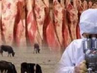 Россельхознадзор задержал в Приморье свыше 90 тонн зараженного мяса