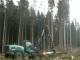 Глубокий кризис лесного сектора, невозможность экономически устойчивой работы в новых условиях