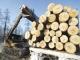 Правительство РФ утвердило на 2011 год ставки экспортных пошлин на круглый лес